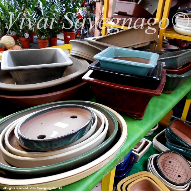 Accessori bonsai vasi per bonsai vivai il garden di for Accessori per bonsai