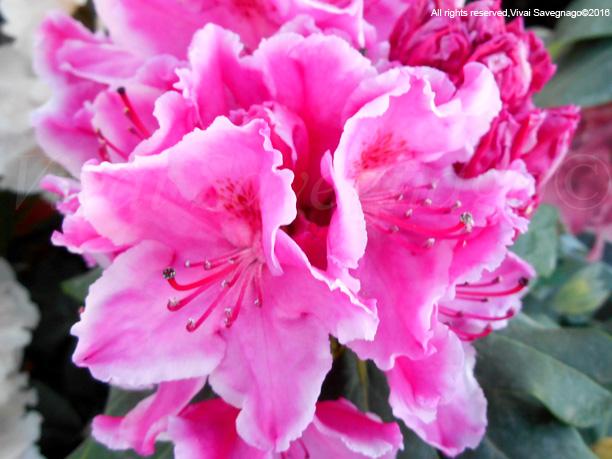 Letto Rosa Claudine : Camera da letto rosa letto a castello con cassetti elegante zc